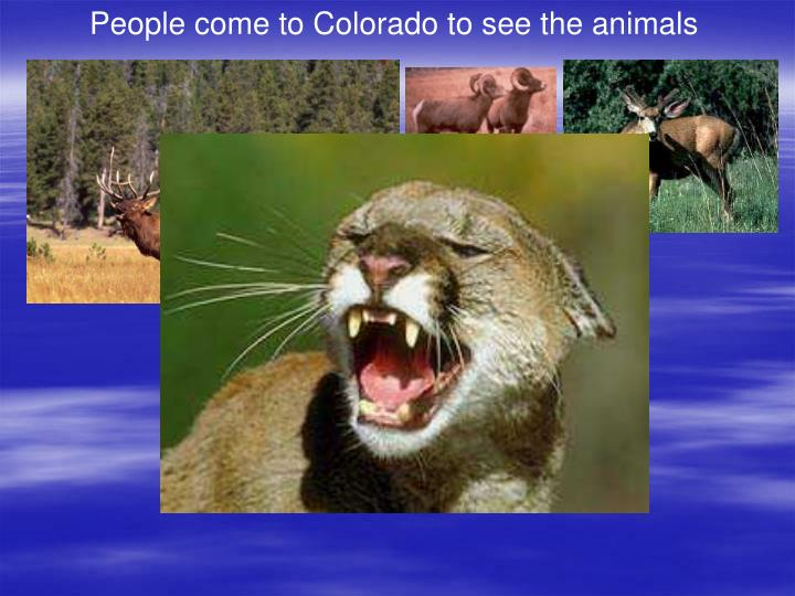 People come to Colorado to see the animals