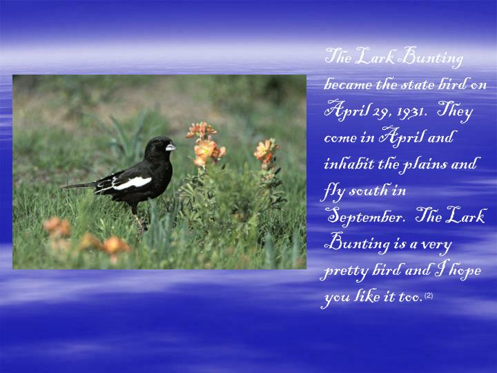 The Lark Bunting became the state bird on April 29, 1931.  They come in April and inhabit the plains and fly south in September.  The Lark Bunting is a very pretty bird and I hope you like it too.